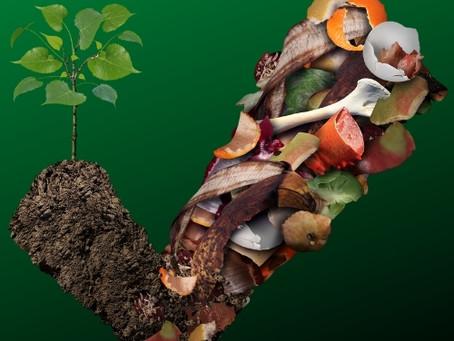 Vamos conversar sobre compostagem doméstica?