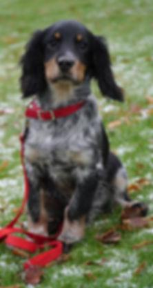 Puppy Training Aberdeen