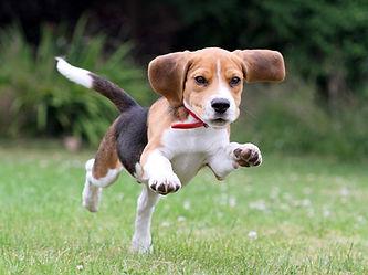 Aberdeen Puppy Class