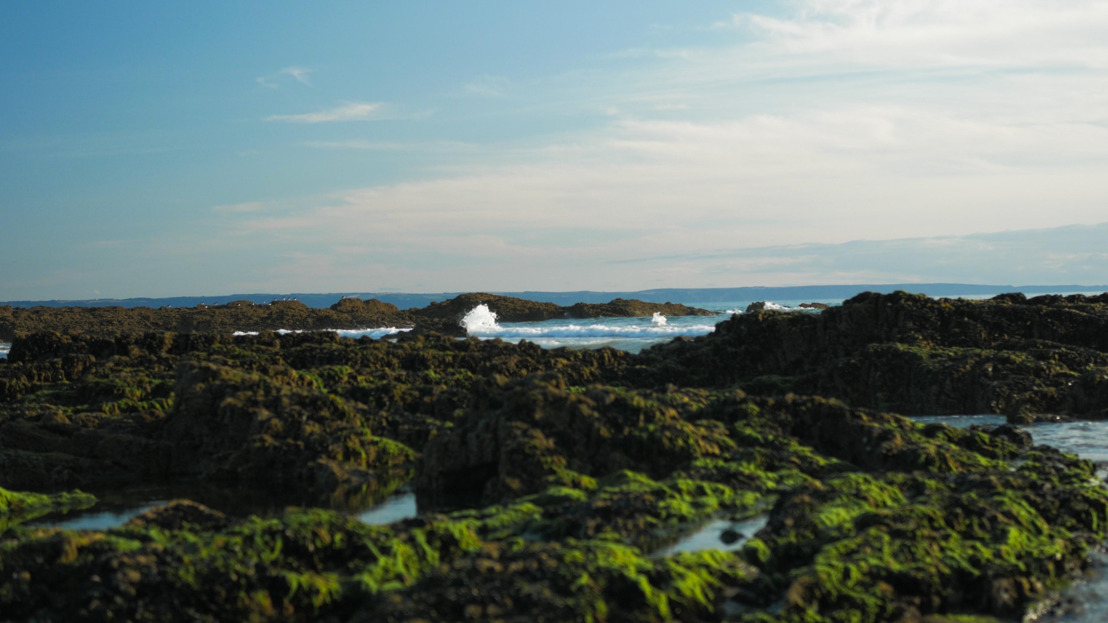 sea, wave crash