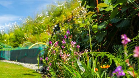 airbnb garden in braunton