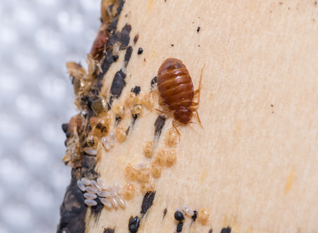 5 things you need to do if you think you have bed bugs