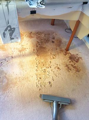 Damage from Carpet Beetle