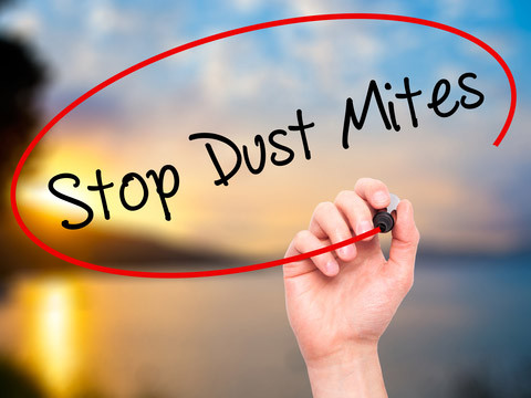 clean carpets will stop dust mites