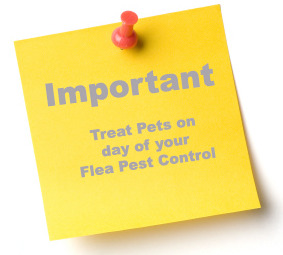 Treat Pets on the day of your Flea Pest Control