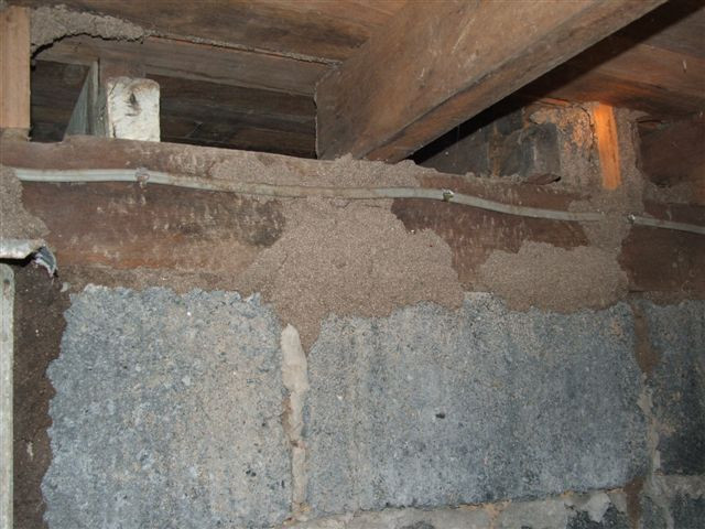 Termite trails found in subfloor