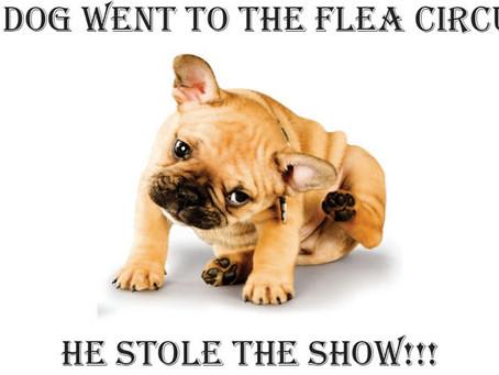 Fleas Season is Here