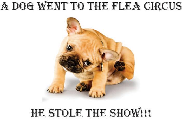 Flea control Brisbane