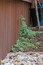 trim garden away from house to prevent termites
