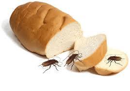 Cockroach on food