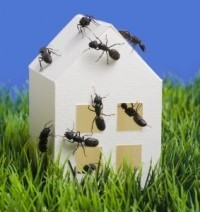 Pest control for the Ashgrove suburb