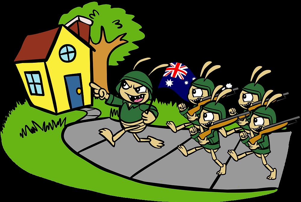 Termite attack Brisbane
