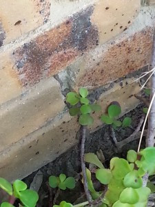 Termite leads on the external of a brick house