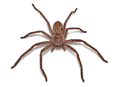 huntsman spider termite treatments brisbane