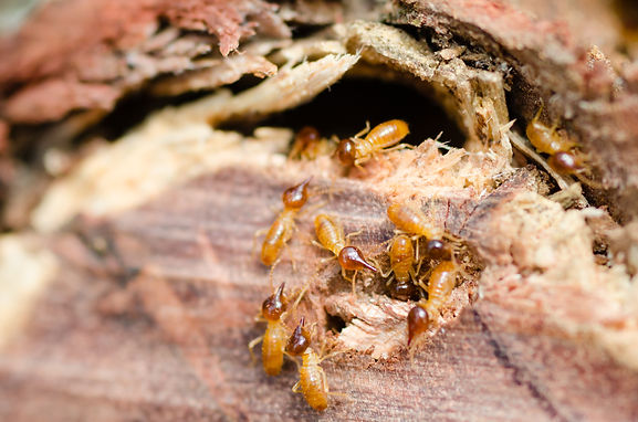 Found termites in the home