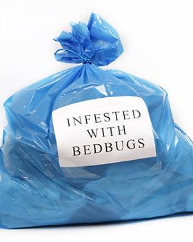 Bed-Bug-Infestation.jpg
