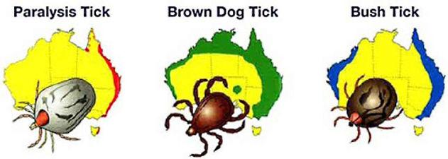 Where ticks are found in Australia - Brisbane termite and pest services