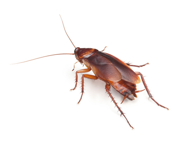 Cockroaches and general pest control - Results Home Services