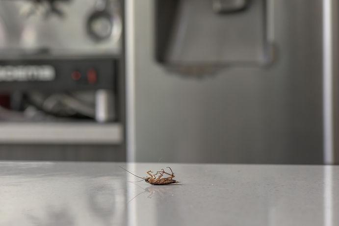 Cockroach pest control Brisbane Homes