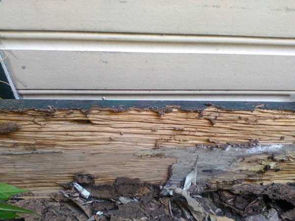 termite damage to timbers of exterior of house