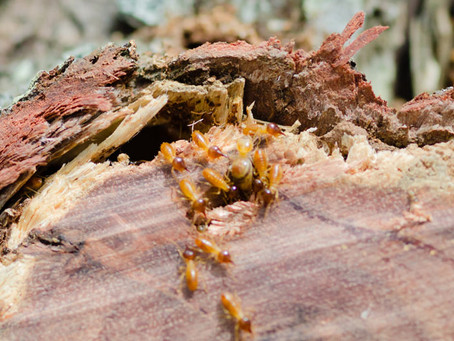 Getting a Quote for Termite Protection