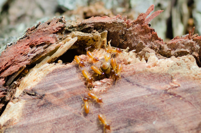 Termite protection quotes