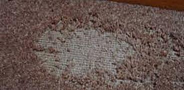 Carpet Case moth.jpg