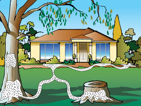 Termites attack another brick home