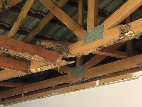The risk of not getting a regular termite inspection may be costly