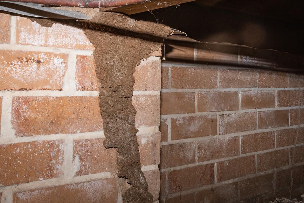 Termites in sub-floor.