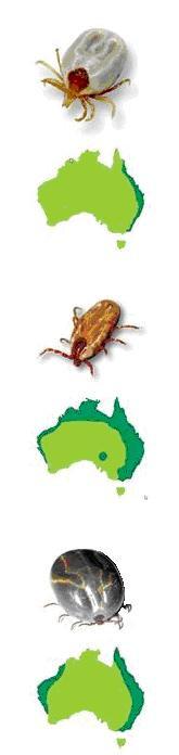 Ticks a problem in Brisbane