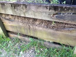 Termite activity in retaining wall