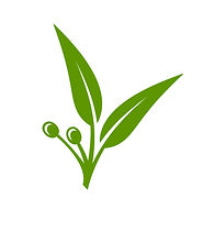 eucalyptus-green-leaves-icon-on-white-ba