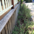 Garden pressed up against the palings of a deck can be a termite threat