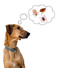 flea problems - home pest control