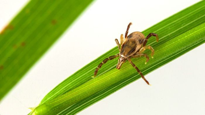 Tick pest control for your property