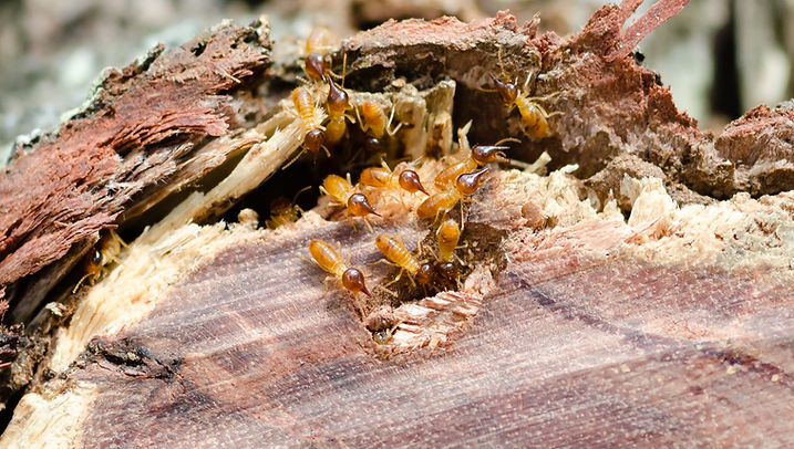 Termites In the Garden - Results Termites and Pest Control Services