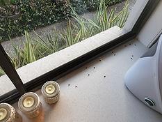 Fly pes control Brisbane