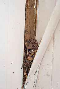 termite attack in wall panels