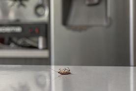 pest controller company brisbane
