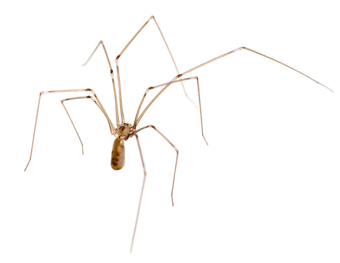 spider problems after rain - brisbane pest control