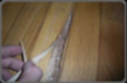 termite workings in floor boards