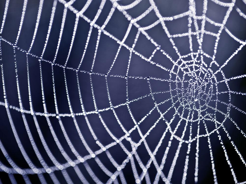 Spiderweb -pest control