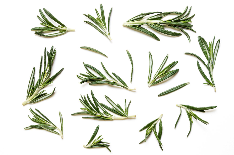 Rosemary twig and leaves isolated on whi