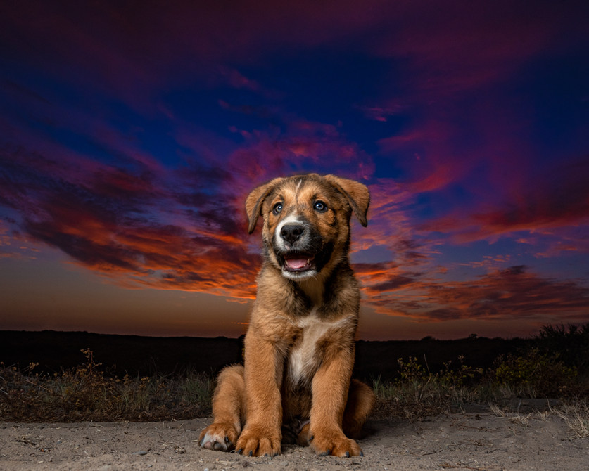 Floki Sunset.jpg