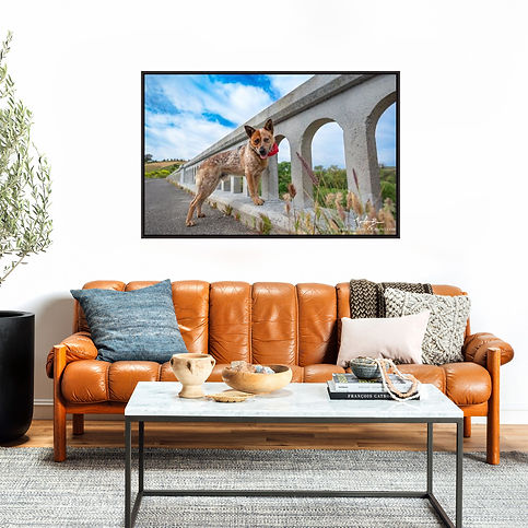 framed canvas, home vision, dog, pet photography, dog photography, couch, wall art, family room, art