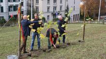 Erste Rebberg-Besetzung in Zürich