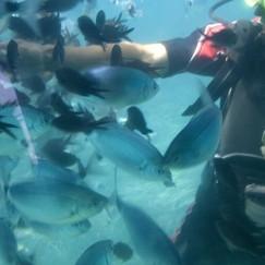 Snorkeling-770x293.jpg