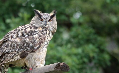 owl-big-770x293.jpg