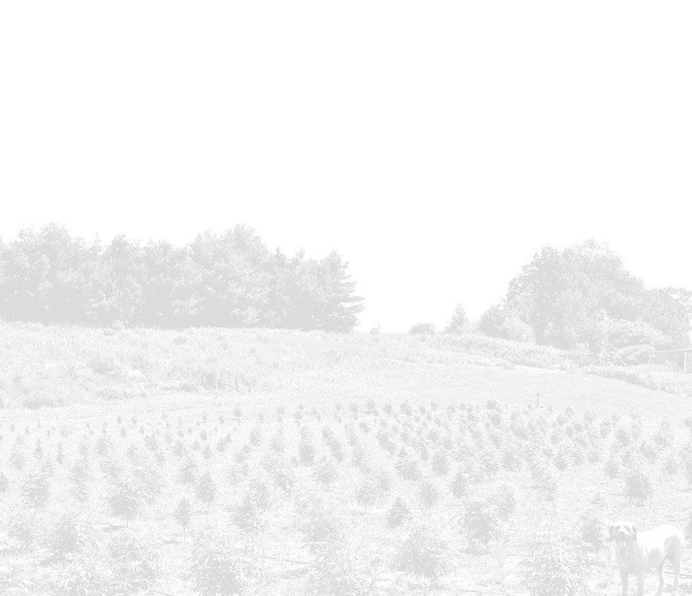 Home-BG-white_edited.jpg